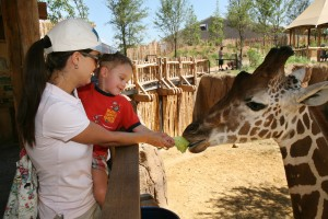 Fun things to do in Dallas Zoo